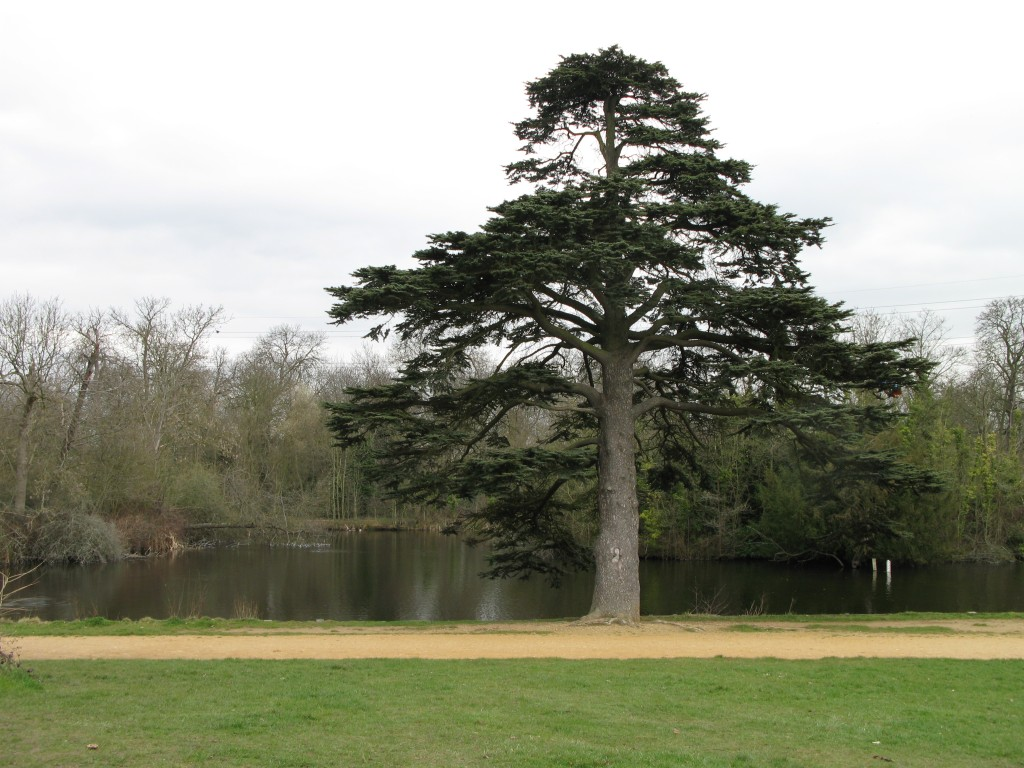 Walks And Walking - Epping Forest Walks - The Chestnut Trail Walking Route - Wanstead Park The Glade
